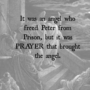 peter angel